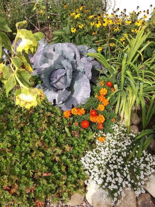 MB's garden