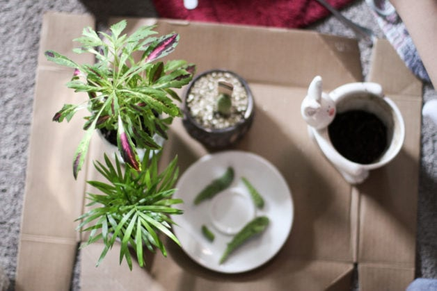 potted plants on a cardboard box.