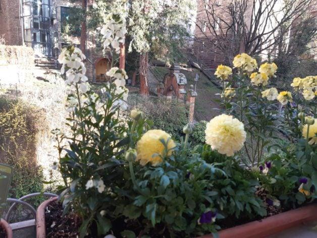 Miryam's balcony with flowers.