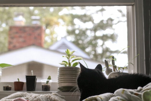 A black cat sitting in front of a window.