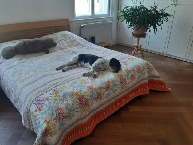 A dog sleeping on a double bed.