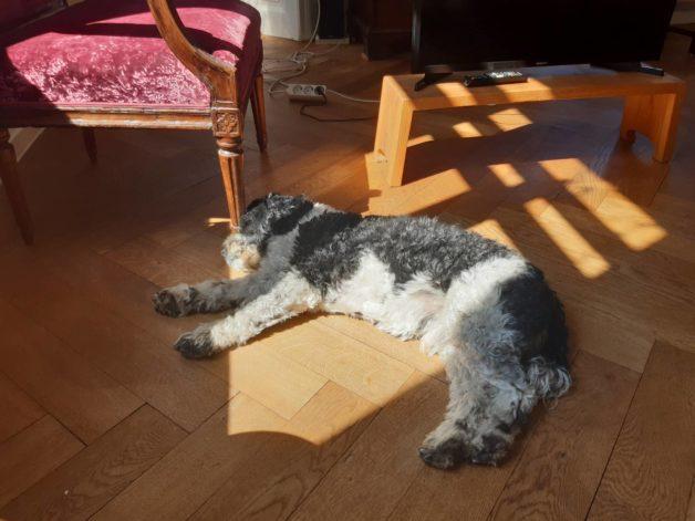 A dog sleeping in the sunshine.