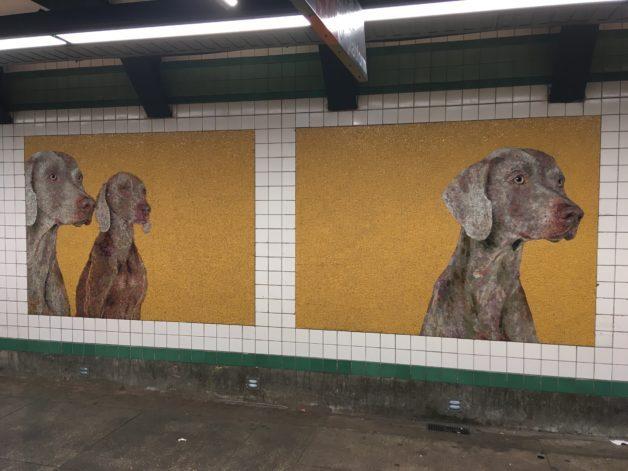 New York City subway dog mosaics.